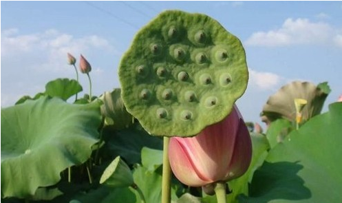 [新聞] 秋季最in的天然零食